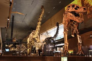 日本で唯一ティラノサウルスのスーが観られる。北九州市立いのちのたび博物館