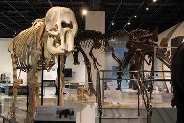 自然史系の展示の充実した科学館。姫路科学館