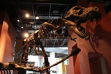 宇宙天文・地学・古生物・現生生物と多岐にわたる大規模な展示。茨城県自然博物館