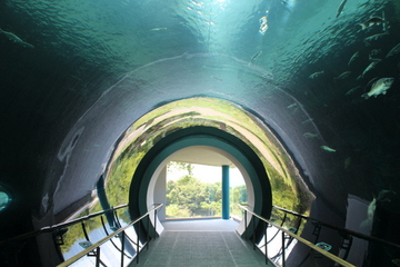 琵琶湖をテーマに化石や生物、歴史等を総合的に展示。滋賀県立琵琶湖博物館