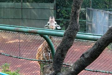 横浜の市街地内にある無料の動物園。横浜市立野毛山動物園