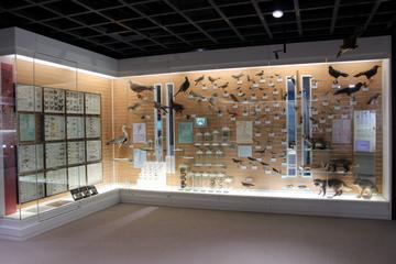 福井の足羽山の自然を丁寧に解説した博物館。福井市自然史博物館