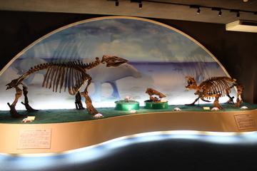 瑞浪層群産の新生代化石を大量に展示した化石専門博物館。瑞浪市化石博物館
