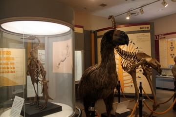 鳥類剥製展示の充実ぶりが凄い!鳥類専門の博物館。我孫子市鳥の博物館