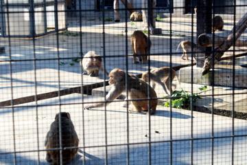 ごく普通の公園の中にしっかりとしたサルの飼育舎がある不思議スポット。大浜公園