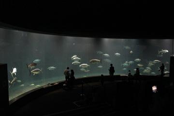 マグロ水槽の迫力が凄い! 都心からすぐの水族館、葛西臨海水族園