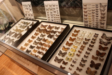 大山の自然や生物が展示された、登山道入り口の大山自然歴史館