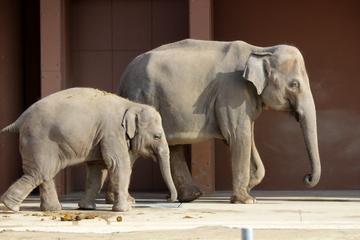 とにかく広い! 見どころたっぷりな東山動植物園