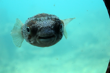 海中の野生生物たちを生で観察できる楽しいスポット、串本海中公園