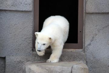 札幌の市街地からすぐの札幌市円山動物園