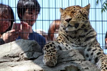 旭川市旭山動物園は何度もリピートしたくなる楽しい工夫でいっぱいの動物園だった。
