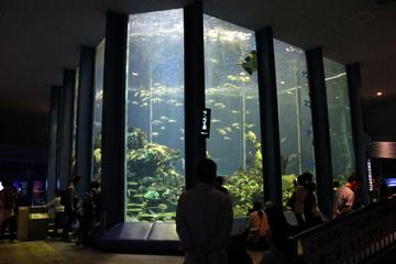 東海大学海洋科学博物館は水族展示の見せ方が凝ってて面白かった。