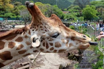 伊豆アニマルキングダムは動物との距離がとっても近くて楽しい。