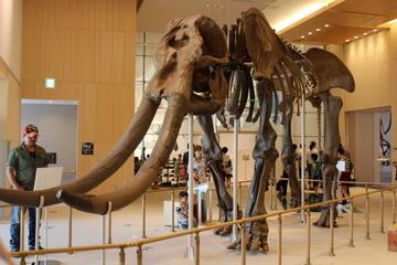 三重県総合博物館(MieMu:みえむ)は鳥羽竜やミエゾウなど三重産化石が充実していた