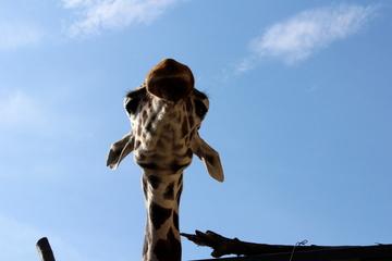 京都市動物園は見せ方を工夫した楽しい動物園だった。