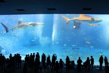沖縄美ら海水族館は問答無用でとにかくでっかかった!