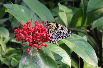 漫湖公園にちょうちょガーデンというチョウの飼育温室がひっそりと建っていた。