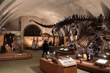 東海大学自然史博物館は古生代~新生代まで古生物がバランス良く展示された博物館だった。