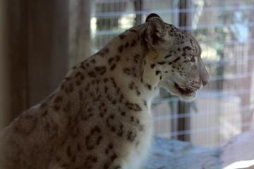 神戸市立王子動物園は円形猛獣舎が楽しい。