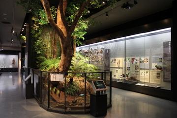 沖縄県立博物館・美術館の自然史展示は化石も現生も固有種だらけで面白い!