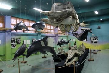 名護博物館は自然史資料と民俗・考古資料の垣根がない展示が非常に良い雰囲気。
