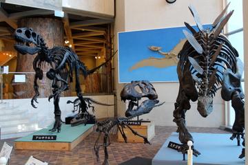 岐阜県博物館は古生代から新生代まで岐阜県産化石で網羅しているのが凄かった
