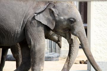 リニューアル完了後の京都市動物園はやっぱり見どころたっぷりな楽しい動物園だった。