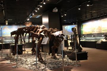 博物館好きの夢「博物館に泊まる」を実現できる! 宿泊できる奥出雲多根自然博物館
