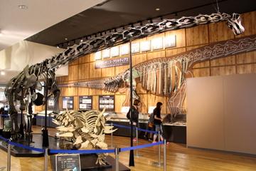 丹波竜化石工房では国産の竜脚類恐竜で唯一の全身骨格、タンバティタニスが見られる!