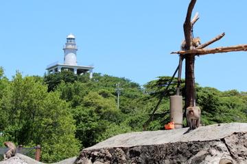 みさき公園は遊園地だけど動物も結構たくさんいる。