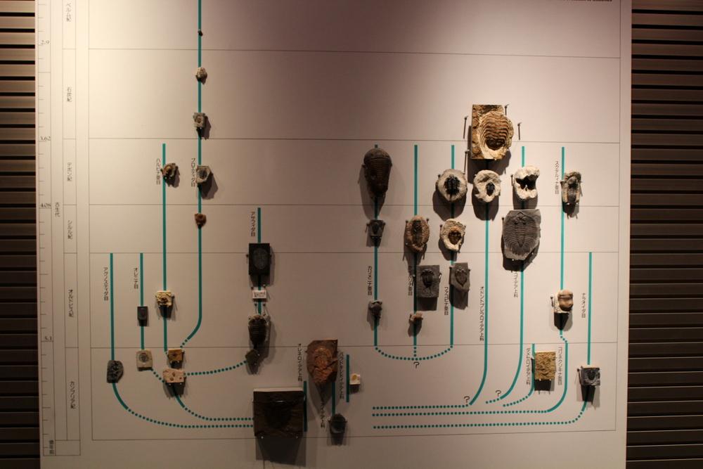 http://pangea-note.com/museum/blogimg/0001/1-IMG_2507.JPG