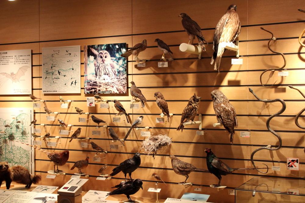 http://pangea-note.com/museum/blogimg/0001/1-IMG_2572.JPG