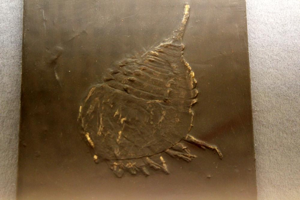 http://pangea-note.com/museum/blogimg/0001/1-IMG_5165.JPG