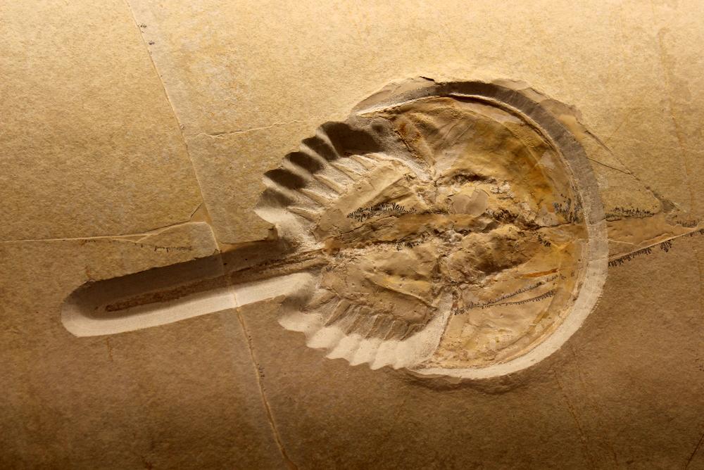 http://pangea-note.com/museum/blogimg/0001/1-IMG_5179.JPG