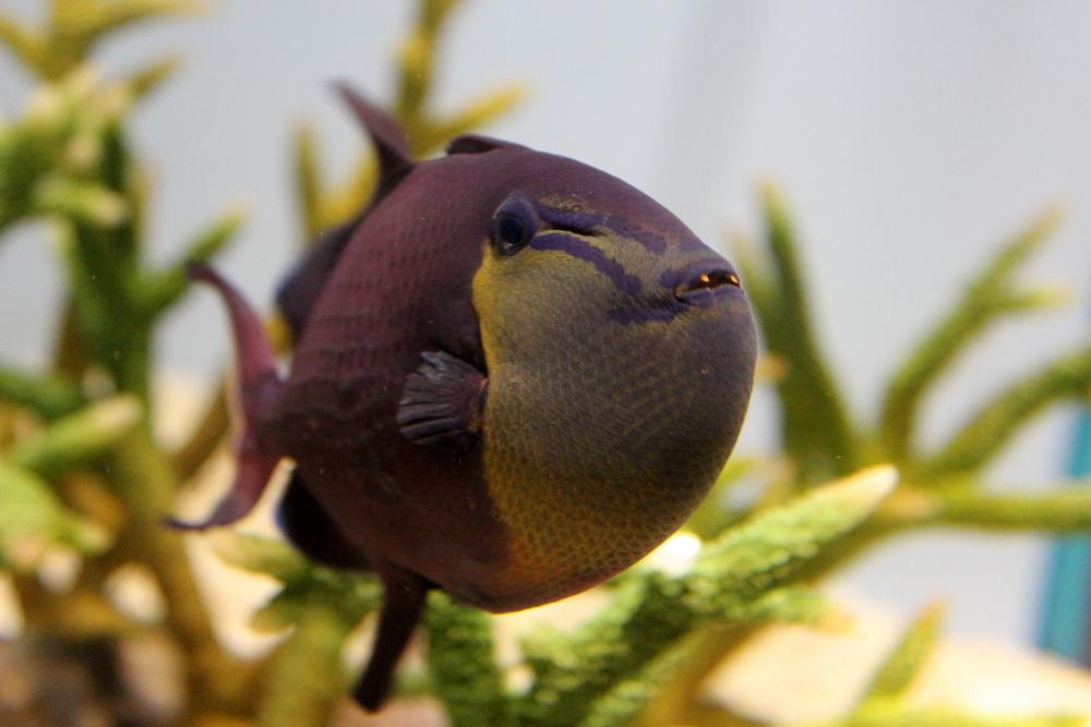 http://pangea-note.com/museum/blogimg/0001/1-IMG_7038.JPG