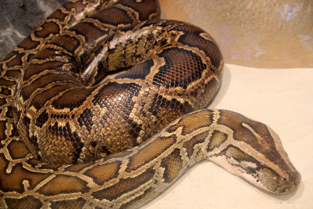http://pangea-note.com/museum/blogimg/0001/1-IMG_7217.JPG