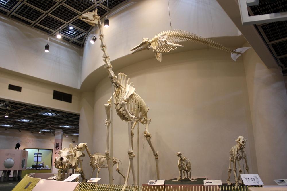 http://pangea-note.com/museum/blogimg/0001/1-IMG_7233.JPG