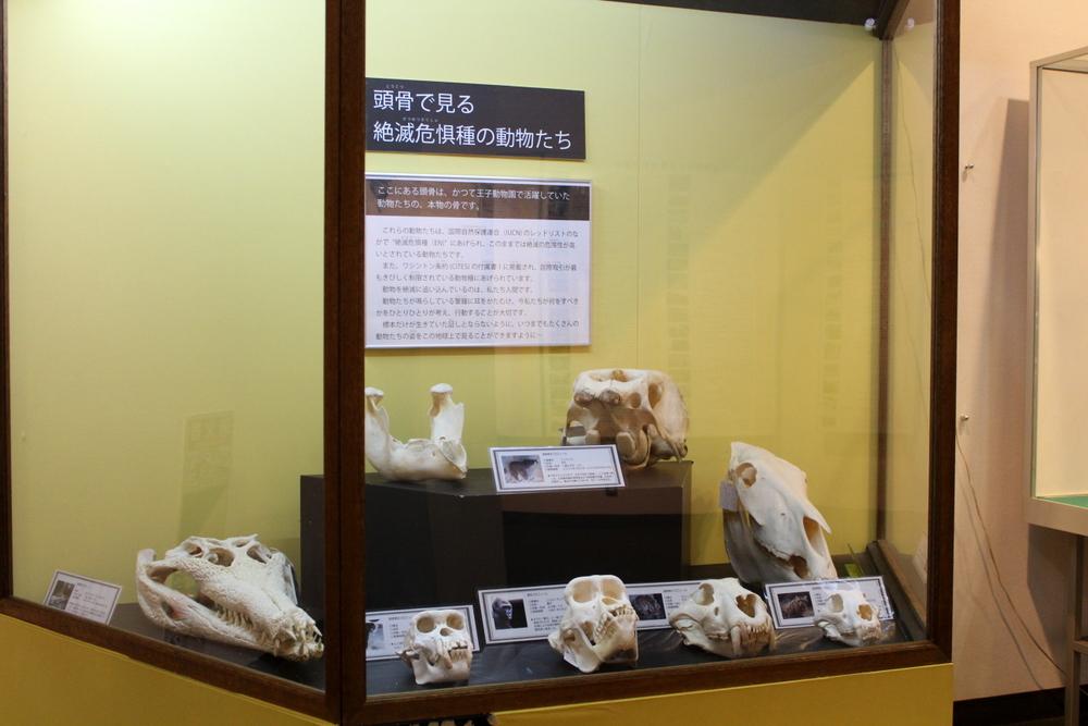 http://pangea-note.com/museum/blogimg/0001/1-IMG_7239.JPG