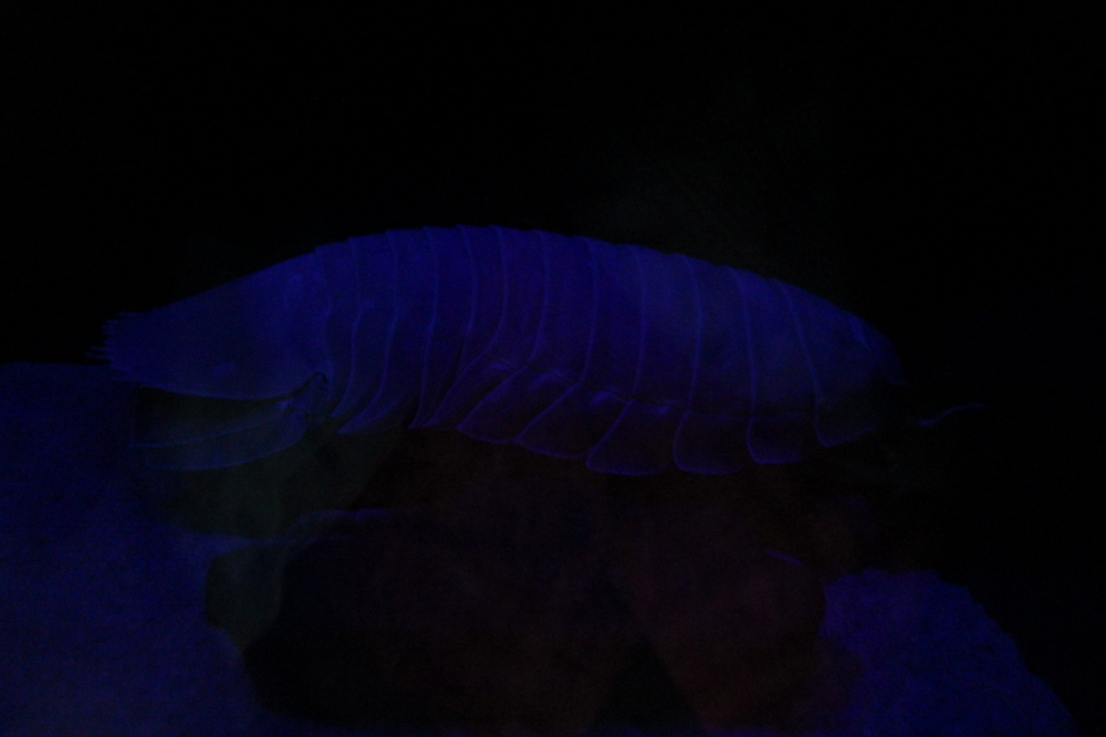 http://pangea-note.com/museum/blogimg/0001/1-IMG_7598.JPG