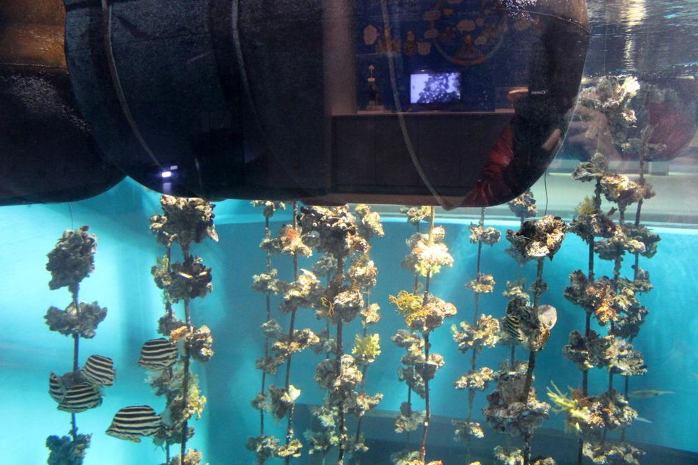 http://pangea-note.com/museum/blogimg/0001/1-IMG_8691.JPG