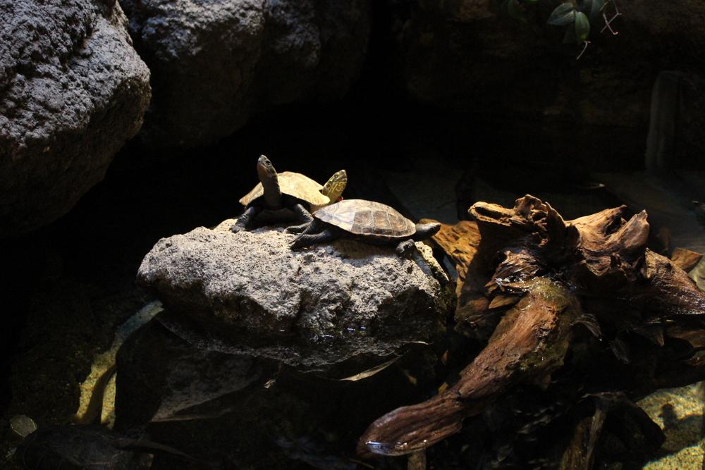 http://pangea-note.com/museum/blogimg/0001/1-IMG_8712.JPG