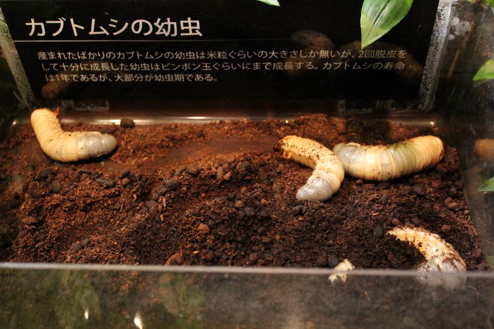 http://pangea-note.com/museum/blogimg/0001/1-IMG_8713.JPG