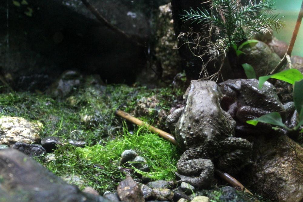 http://pangea-note.com/museum/blogimg/0001/1-IMG_8725.JPG