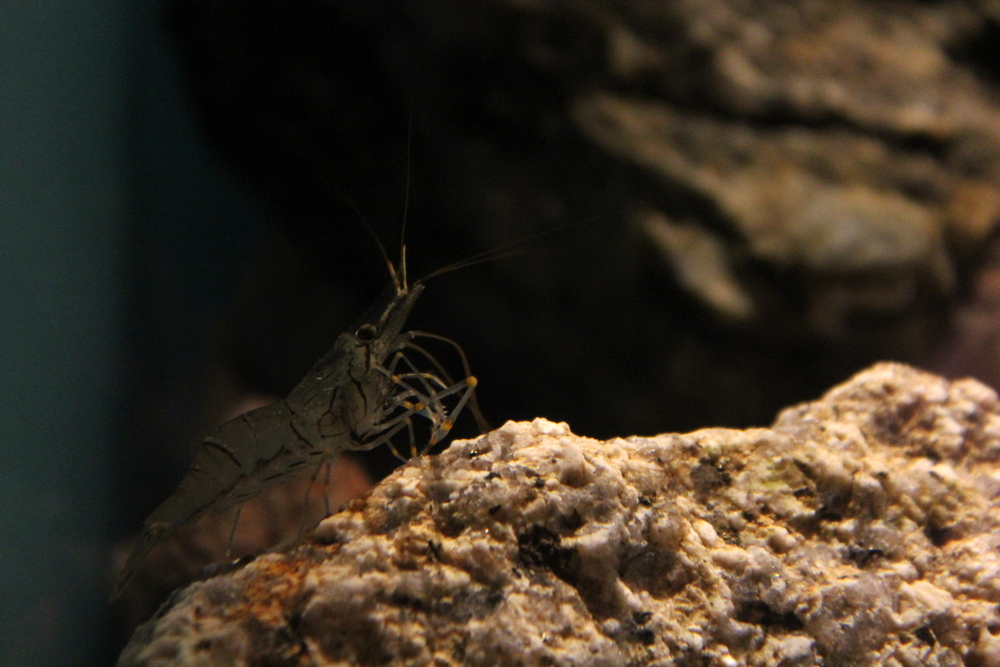 http://pangea-note.com/museum/blogimg/0001/1-IMG_8744.JPG