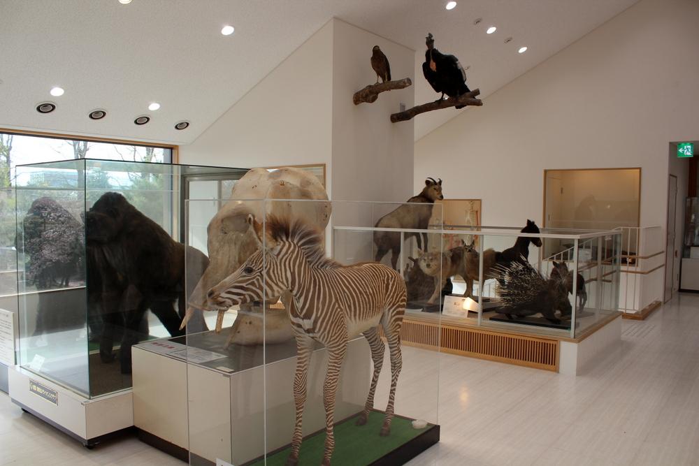 http://pangea-note.com/museum/blogimg/0001/1-IMG_9045.JPG