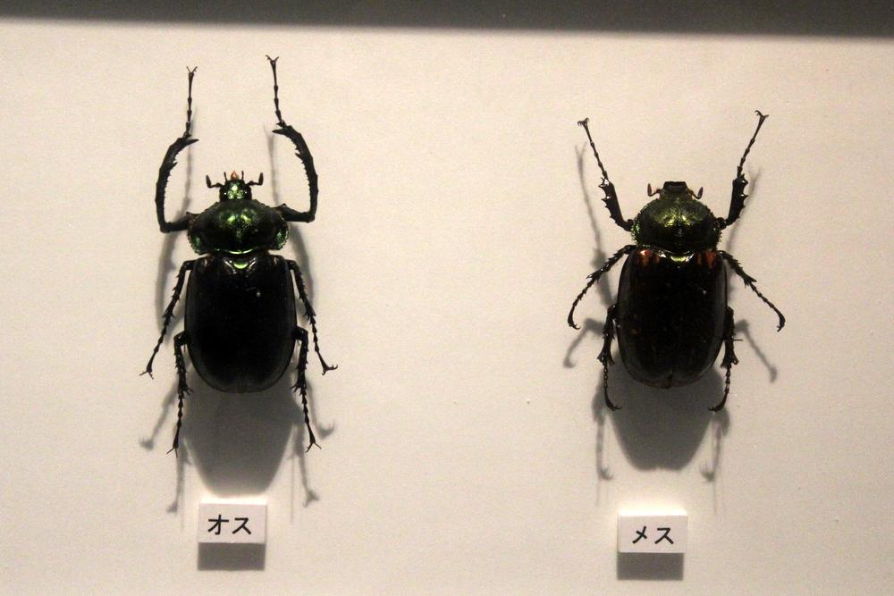 http://pangea-note.com/museum/blogimg/0001/1-IMG_9926.JPG