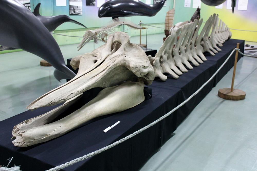 http://pangea-note.com/museum/blogimg/0001/1-IMG_9992.JPG