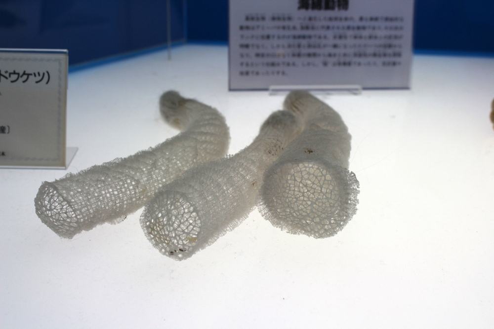 http://pangea-note.com/museum/blogimg/0002/1-IMG_0123.JPG