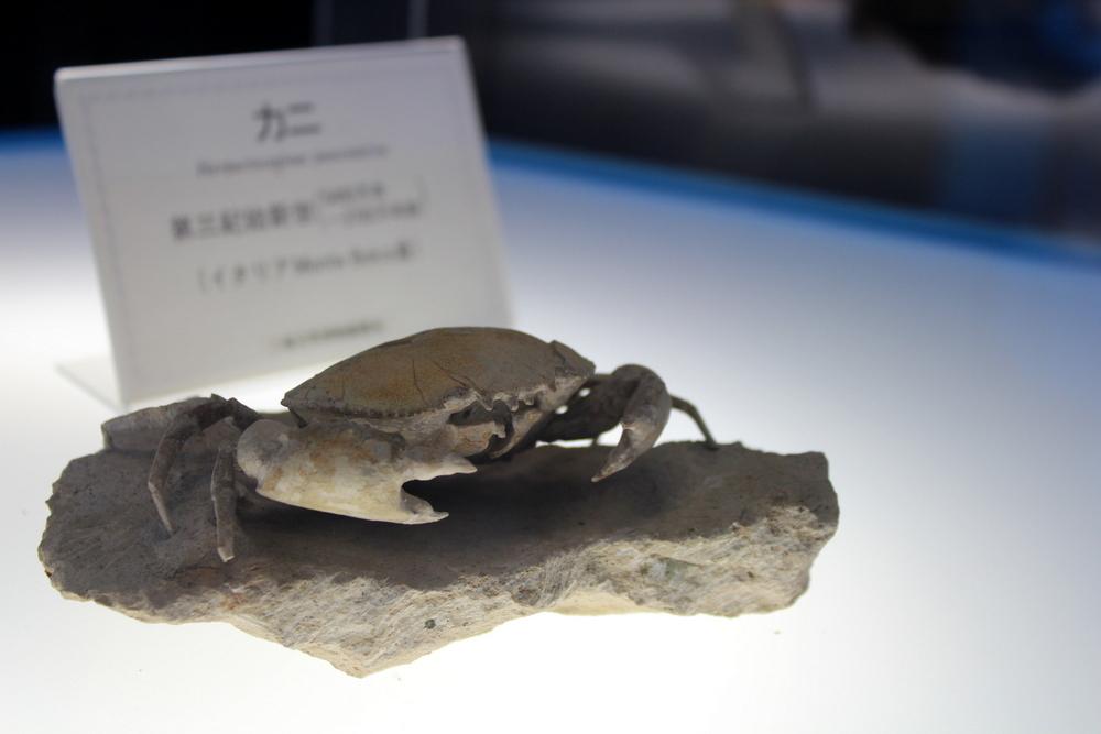 http://pangea-note.com/museum/blogimg/0002/1-IMG_0126.JPG