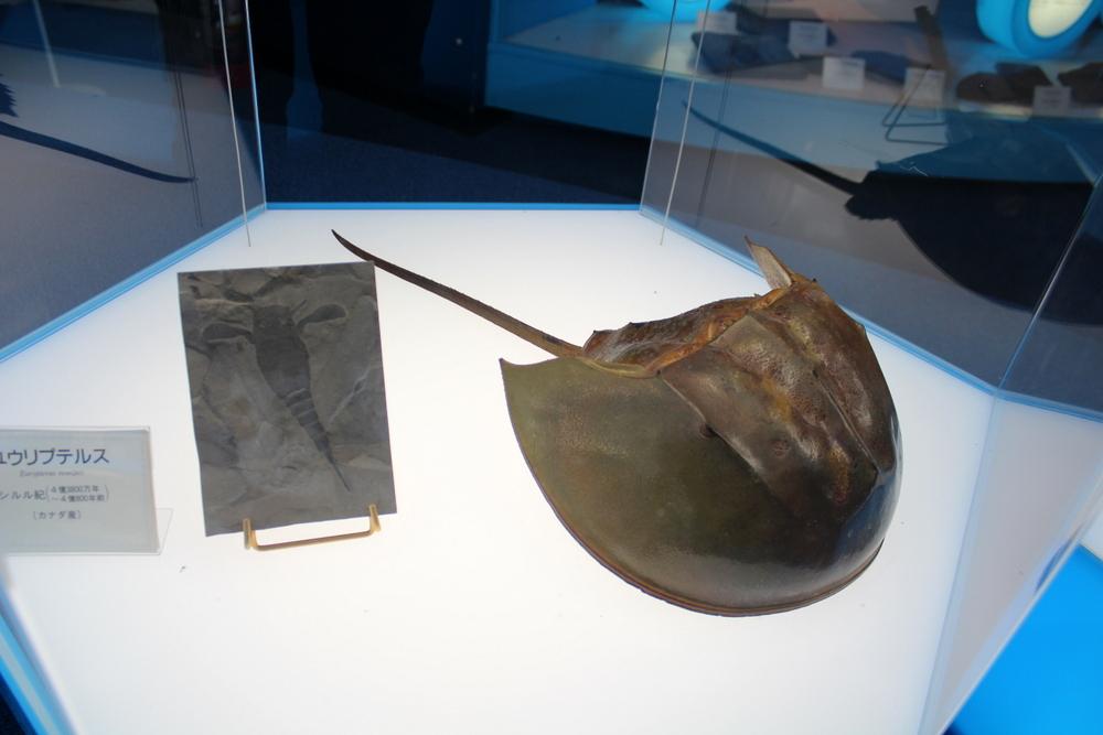 http://pangea-note.com/museum/blogimg/0002/1-IMG_0128.JPG